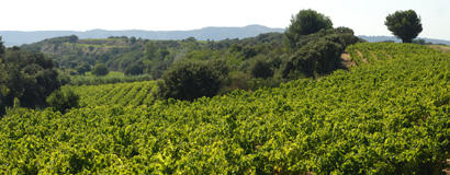 Vignoble de Tavel